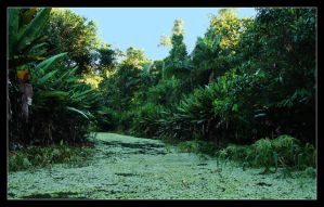 Rainforest Swamp by Krycke