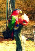 parrot colour by IgnGiannioglou17