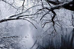 beautiful landscape of trees in the mids of winter by Beautyandabeat36