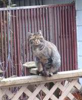 Sally on the railing by Ripplin