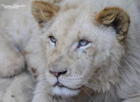 The young White Prince by MorganeS-Photographe