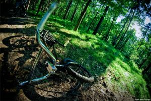 forest 2 by franekbmx