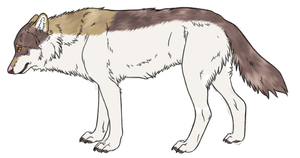 New Wolf Character  by AngelWolfsRevenge