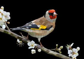 The Goldfinch / Het Puttertje (version 2, Black) by TimCoster