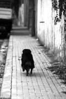 Alone in street by EricLoConte