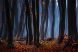 -Morning dusk of the leaves- by Janek-Sedlar