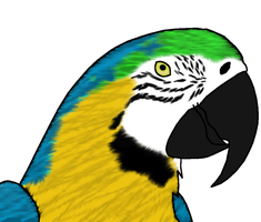Parrot Realism Attempt by Smigolson