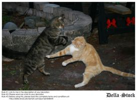 Cat Fight by Della-Stock