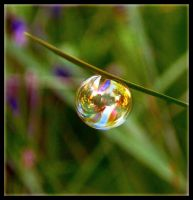 Rainbow Bubble close up by Forestina-Fotos
