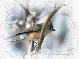 Tufted Titmouse in Winter by desmo100