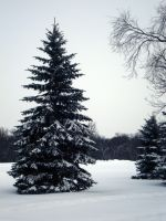 Oh Christmas Tree by midnightstouchSTOCK