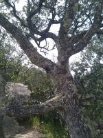 Tree by Tithos