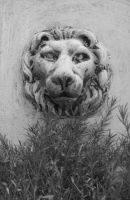 The Garden: Lion B+W by en-visioned