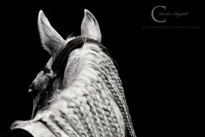 Endurane Horse Portrait by Colourize