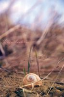 little snail by ade89