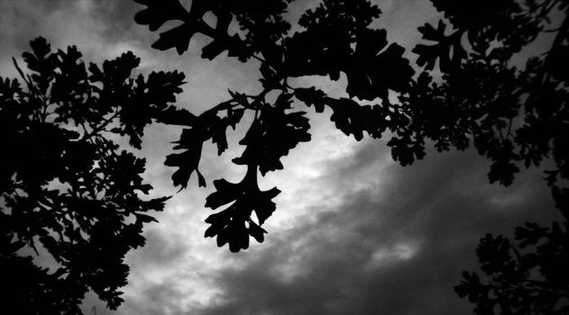 Black And White Leaves by Goldenfurproduction