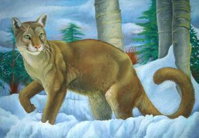 Snowy Cougar by AldemButcher