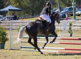 STOCK Canungra Show 2013-40 by fillyrox
