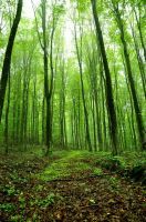 green forest stock by marlene-stock