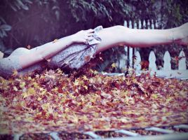 Fall by Sarahmillerphoto
