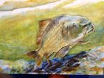 Carp on the run by chuckwhat