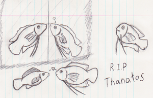 R.I.P Thanatos Fishy by Bloodstainedhowl
