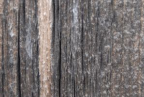 wood texture by HoldFastStock