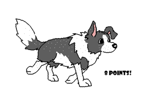Border collie adoptable by Koala-Sam