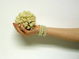 Hand with Coral Stock6 by NoxieStock