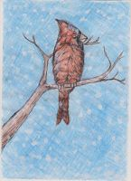 Winter Cardinal by ArcticIceWolf