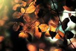 Fall leaves. .. by light-from-Emirates