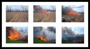 Prescribed Burning by environment