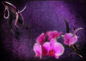 Grunge Orchids by TheFightingGoddess