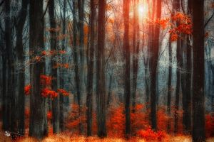 behind the bars by ildiko-neer