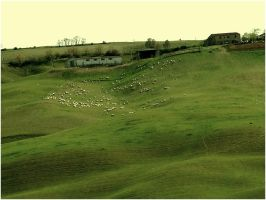 Sheep in the pasture. by BRITakeaway