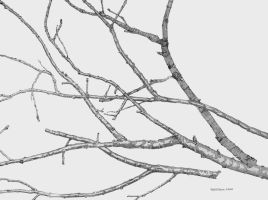Twigs And Branches by Daniel-Storm