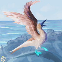 Blue Footed Booby by lydkid