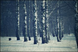 Winter in the woods by hunter2