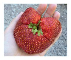 Giant Mutant Strawberry Heart by VintageWarmth