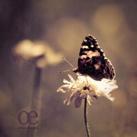 My friend, the butterfly by dareme