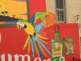 parrot parrot on the wall by amitm123