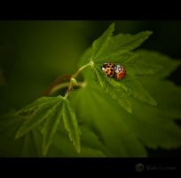 Love Bugs by Violet-Kleinert