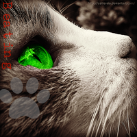 Beatingpaw Edited Picture Request by IriisKitty