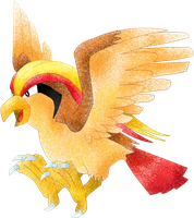 Pidgeot by Sulfura