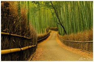 Bamboo walk by jaydoncabe