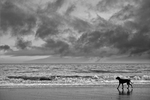 Storm dog by PoppyHunter