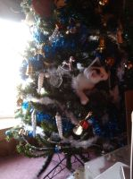 Kitty In Christmas Tree by Lovely-LaceyAnn-Art