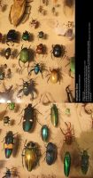 Assorted Insects Stock 1 by Melyssah6-Stock