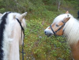 Two horses in the forest XD by xRaggsokkenx