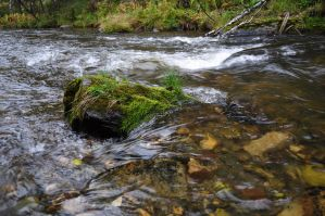 Stone in the water by Tumana-stock